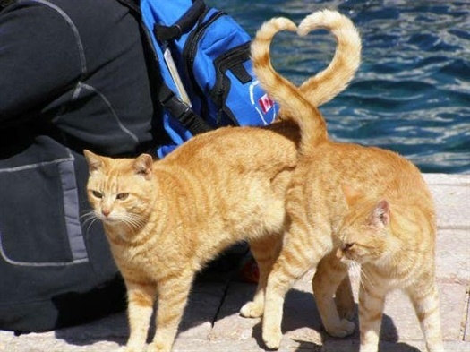 50-cats-heart-shape-with-ta