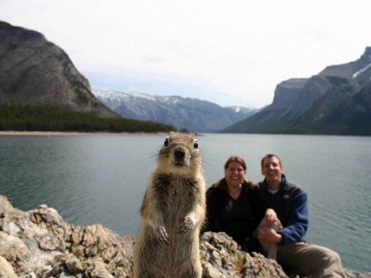 47-squirrel-photobomb-banff