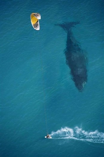 30-kite-surfing-with-whale-