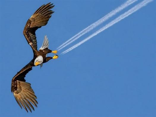 29-eagle-perfect-timing