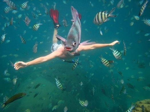 14-underwater-fish-photobom